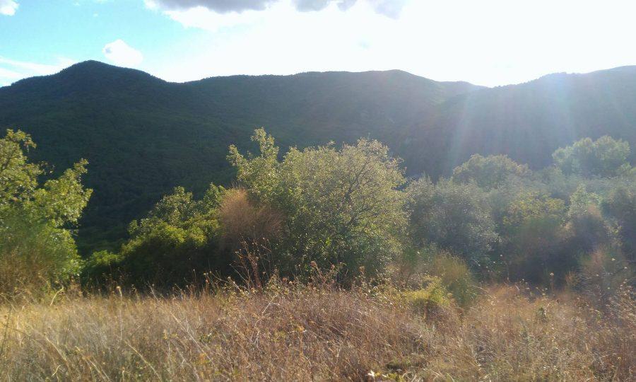Terreno agricolo con casa ed ulivi secolari a Castroregio (CS)